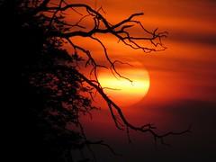 Sundown............... (yadhukrishnan512) Tags: sunset sun nature beauty forest photography colorful tamilnadu masinagudi flickrsbest