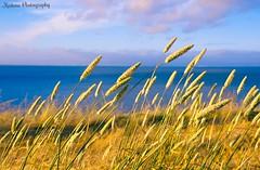 Western Winds (k.garapati) Tags: ocean blue sea sky flower green nature water clouds photo cool wind air