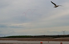 CyprusPictures_DSC_6345 (2) (@CyprusPictures) Tags: seagull redarrows windturbine fyldecoast thulbornchapmanphotography fyldecoastphotographs freeportretailparkfleetwood