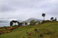 Walking in the Rain (maureen bracewell) Tags: trees cloud mist mountains green nature rain landscape scotland spring path may loch gorse lochhourn highlandsofscotland maureenbracewell