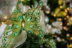 Butterfly Christmas ornament (Victor Wong (sfe-co2)) Tags: christmas xmas light white blur color macro green art beautiful beauty closeup butterfly gold design december pattern image symbol bokeh background traditional seasonal decoration ornament specular ornate shape jewels highlight studs