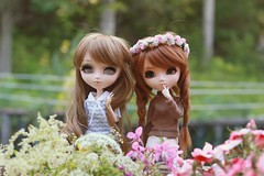flower pals (e f i c h u ) Tags: new flowers brown white ginger eyes doll dolls teddy blind alice redhead wig classical pullip brunette cherie coolcat babybrown sbhs rmt shinku obitsu eyechips 27cm leekeworld rewigged sbhm squirrellicious royalcarrot efichu denelfte