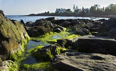 IMG_8495 (walpert17) Tags: moss beach ocean water