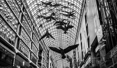 En el centro comercial ... (JL.Pizarro) Tags: ca toronto ontario canad