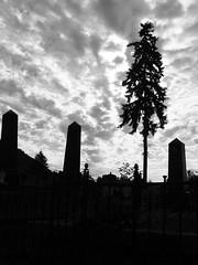 """""""Nézek, szembe a Nappal"""" (> akela <) Tags: nagybánya temető"""