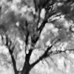 Liquid Forest (Mabry Campbell) Tags: november blackandwhite usa abstract reflection tree texture nature water leaves photography 50mm photo dallas texas photographer image unitedstatesofamerica fav20 photograph infrared 100 f80 fav30 squarecrop fineartphotography 2014 fav10 720nm 20sec fav40 intimatelandscape ef50mmf12lusm fineartphotographer houstonphotographer mabrycampbell november152014 20141115img7759