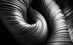 Lines and Light (cordula.mattioli) Tags: isseymiyake designer fabric monochrome lines macro macromondays macromondaysstripes