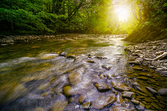 river with stones on shores anmong the forest at sunset-161606 (M. Pellinni) Tags: ifttt dropbox river forest nature water tree beauty green background travel landscape clean reflection scene shore stream beautiful flow greenery natural summer fresh stone wood rock outdoor creek wet brook wild mountain sun sunset autumn light sunlight ray beam flare dawn fall evening scenic dramatic