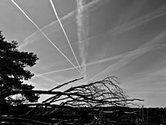 Contrails (Flimflim) Tags: sky bw holland lines landscape crisscross contrails posbank vliegtuigstrepen