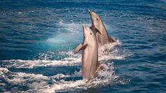 Going Backwards (rafa.esteve) Tags: espaa water valencia aquarium spain dolphin 16x9