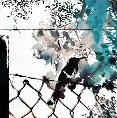 impressions of nature(Best viewed large) (CatnessGrace) Tags: pink flowers blue trees plants white painterly black bird art texture nature leaves birds photomanipulation fence pastels barbedwire impressionism pastelcolours