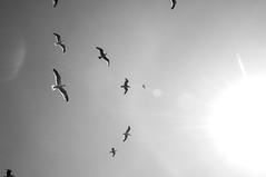 Baker Beach 3.27.16 (arterial spray) Tags: 2016 bakerbeach barbeque bbq birds california candid dalliswillard easter event grill ocean pacific park party presidio sanfrancisco seagulls unitedstates us