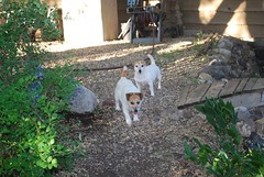 Didi & Maggie (Danielle Carrier) Tags: dog pet pets dogs maggie didi