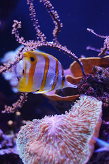 Tropical (Veronica Fontebasso) Tags: fish tropical tropicalfish acquarium ocean photography