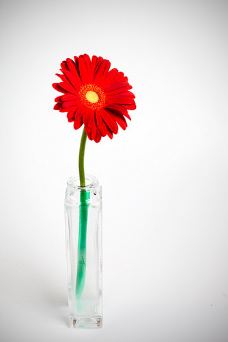 Red Flower Still Life (studio play)