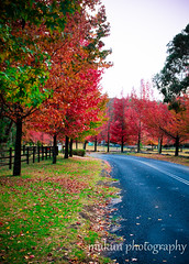 autumn burn (mukunkanap) Tags: road street blue autumn panorama house mountain holiday mountains color colour tree fall wet rain fog corner canon fence garden season gate track mt bright pano cottage sydney australia tags autumncolors mount trail hedge wilson canopy 500d 60d abigfave