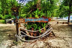 Beras-Basah (dandooon2010) Tags: beach palmtree malaysia a55 sonyalpha lankawiisland islandhobby