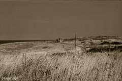 Gargano, Puglia (Eleuherios) Tags: sea italy field sepia italia wind wheat country lonely puglia gargano