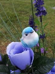 Bird and Flower (Theophilus Photography) Tags: flower bird cemetery arrangement