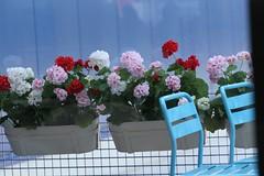Blue Chairs (brandsvig) Tags: flowers summer ikea restaurant skne chairs sweden sunday july sverige blommor malm sommar svgertorp restaurang canon500d 702004l stolar sndag 2013