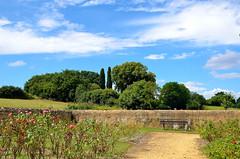 La Roseraie (Smoke It 2013) Tags: sky cloud france flower nature fleur rose pierre ciel nuage arbre asnires feuille sarthe paysdelaloire d5100