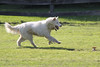 "Princess Running The Mazing Chase Course • <a style=""font-size:0.8em;"" href=""http://www.flickr.com/photos/96196263@N07/9554501957/"" target=""_blank"">View on Flickr</a>"
