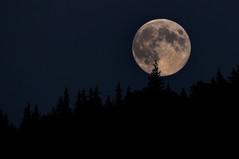 Evergreen Over Mare Nubium On A Rare Blue Moon (Zircon_215) Tags: moon silhouette fullmoon craters evergreens bluemoon cornerbrook fullsturgeonmoon fullredmoon grainmoon marenubium greencornmoon nikond300 sigma150500mm rarelunarphenomenon
