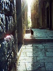 Crna mačka | Black cat