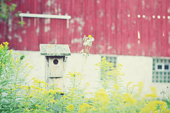 there's always something... (cherrygurl) Tags: red yellow barn focus soft goldenrod birdhouse nikond3100 september32013