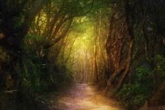 A mountain path (Saraia77) Tags: fairytale forest fairy about wonderland magical twop firstquality greenscene alberoefoglia awardtree absolutegoldenmasterpiece redmatrix marculescueugendreamsoflightportal