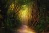 A mountain path (Saraia77) Tags: fairytale forest fairy about wonderland magical twop firstquality greenscene alberoefoglia awardtree absolutegoldenmasterpiece redmatrix marculescueugendreamsoflightportal
