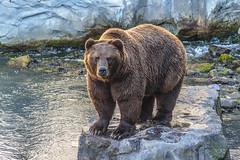 zoom Erlebniswelt Gelsenkirchen Alaska