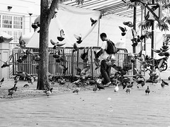 _A020838 (Plototot Tot) Tags: street white black against face birds sign bag singapore feeding time pigeon main flock rules olympus pack your law feed f18 violation caught 45mm act omd bugis knapsack em5