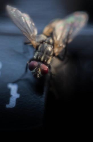 Die Fliege auf der Tastatur