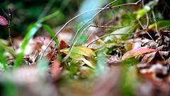 Laub | Foliage (nina_gaisch) Tags: november autumn fall nature leaves season austria sterreich laub herbst jahreszeit foliage bltter hst steiermark styria