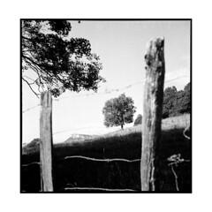 the tree • solutre, burgundy • 2013 (lem's) Tags: tree rock rolleiflex fence landscape view paysage arbre vue roche planar solutre cloture bourgogn eburgundy