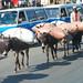 18_2009_01_Ethiopia_031