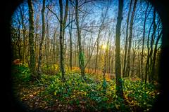 University Forest - Sart Tilman (Falcdragon) Tags: morning winter forest sunrise woods belgium 16mm liege a7 lige sarttilman walloonregion