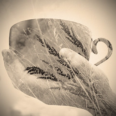 Cuppa Nature (StacieStrublePhoto) Tags: plants cup nature coffee grass exposure hand tea double