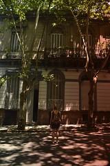 pltanos aqui, l e acol (Leticia Manosso) Tags: uruguay montevideo platanos