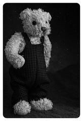 A polar night (Allan Saw) Tags: bear sky night stars teddy plar