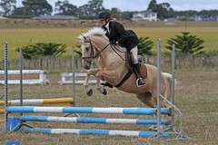 Equestrian (Paul J's) Tags: horse club games event pony masters equestrian taranaki 2014 waitara