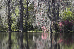 Magnolia Plantation and Gardens (DFChurch) Tags: lake reflection mirror south charleston explore carolina magnoliaplantation