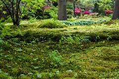 Japanse Tuin Clingendael 2014-02293 (Arie van Tilborg) Tags: japanesegarden denhaag thehague clingendael japansetuin clingendaelestate landgoedclingendael