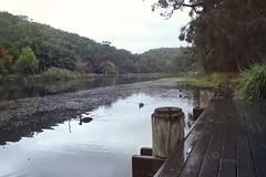Audley Park on a rainy day (everyday sh_ter) Tags: park beach forest sydney waterfalls kookaburra wattamolla garie royalnationalpark audley stanwell hackerriver