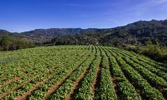 Mankayan Farms 2 (The Cordillera Life) Tags: cordillera benguet igorot kankanaey mankayan guinaoang