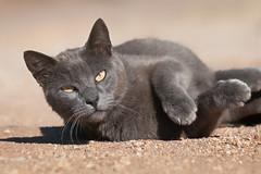 Sup (Luis-Gaspar-Taking-A-Break) Tags: portrait praia beach portugal face animal cat nikon feline outdoor iso400 retrato gato felino oeiras 1800 nino f8 streetcat d60 gatoderua pacodearcos 55300