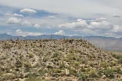 0U1A6820 Saguaro National Park - Rincon Mountains (colinLmiller) Tags: arizona mountains tucson nps east np nationalparkservice saguaronationalpark rincon doi 2016 unitedstatesdepartmentoftheinterior