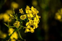 Viewfinder-11 (sven.vansantvliet) Tags: blue shadow sky flower colors yellow fleurs jaune drops weide couleurs schaduw geel bloem druppel tulp kleuren tullip paardebloem boterbloem pisbloem lentebloesembloemenbijhuis
