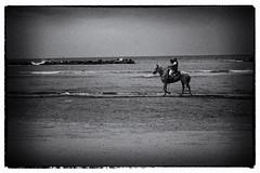 Aspettando l'estate (maurizio.difederico) Tags: mare maredinverno mareadriatico bianconero francavillaalmare spiaggia beach blackandwhite cavallo horse